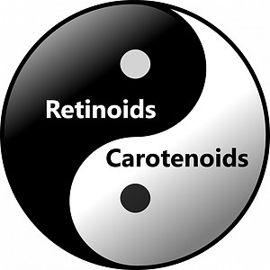 retinoids-and-carotenoids-work-synergistically