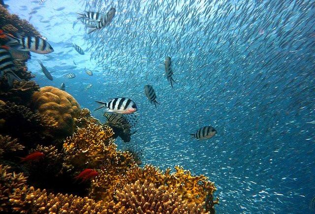 Best Fish Oil Supplements 2020